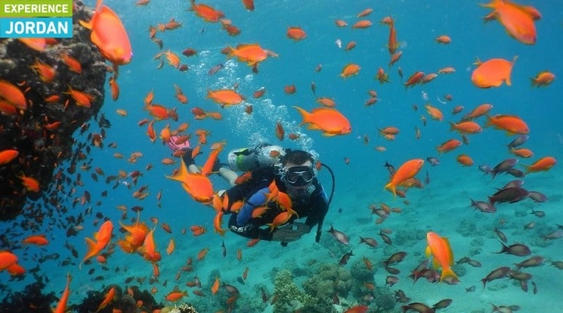 Experience under the red sea - ExJO