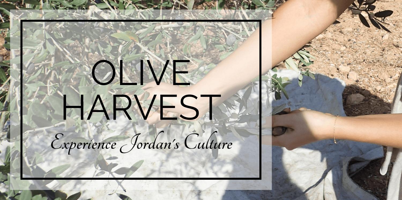 Blog OliveHarvest