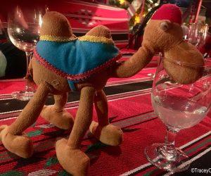Camel drinking